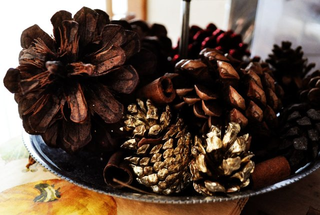 Leftover Pinecones from Thanksgiving!
