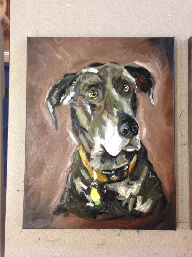 Final Shelby The Great Dane!